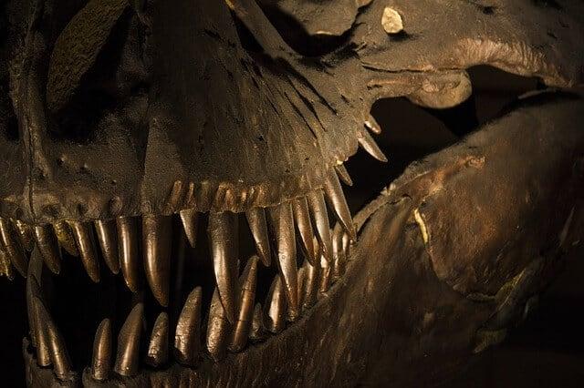 מוזיאון הטבע בלונדון (מוזיאון ההיסטוריה) – NATURAL HISTORY MUSEUM